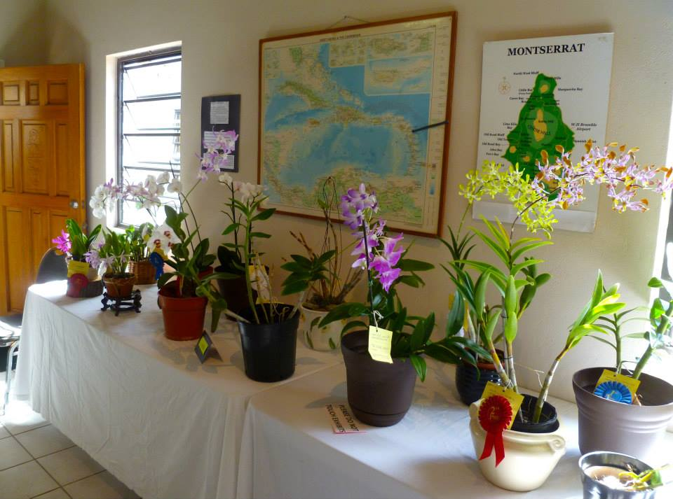 Range of orchids