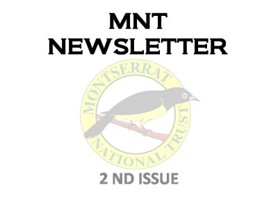 MNT-NEWSLETTER